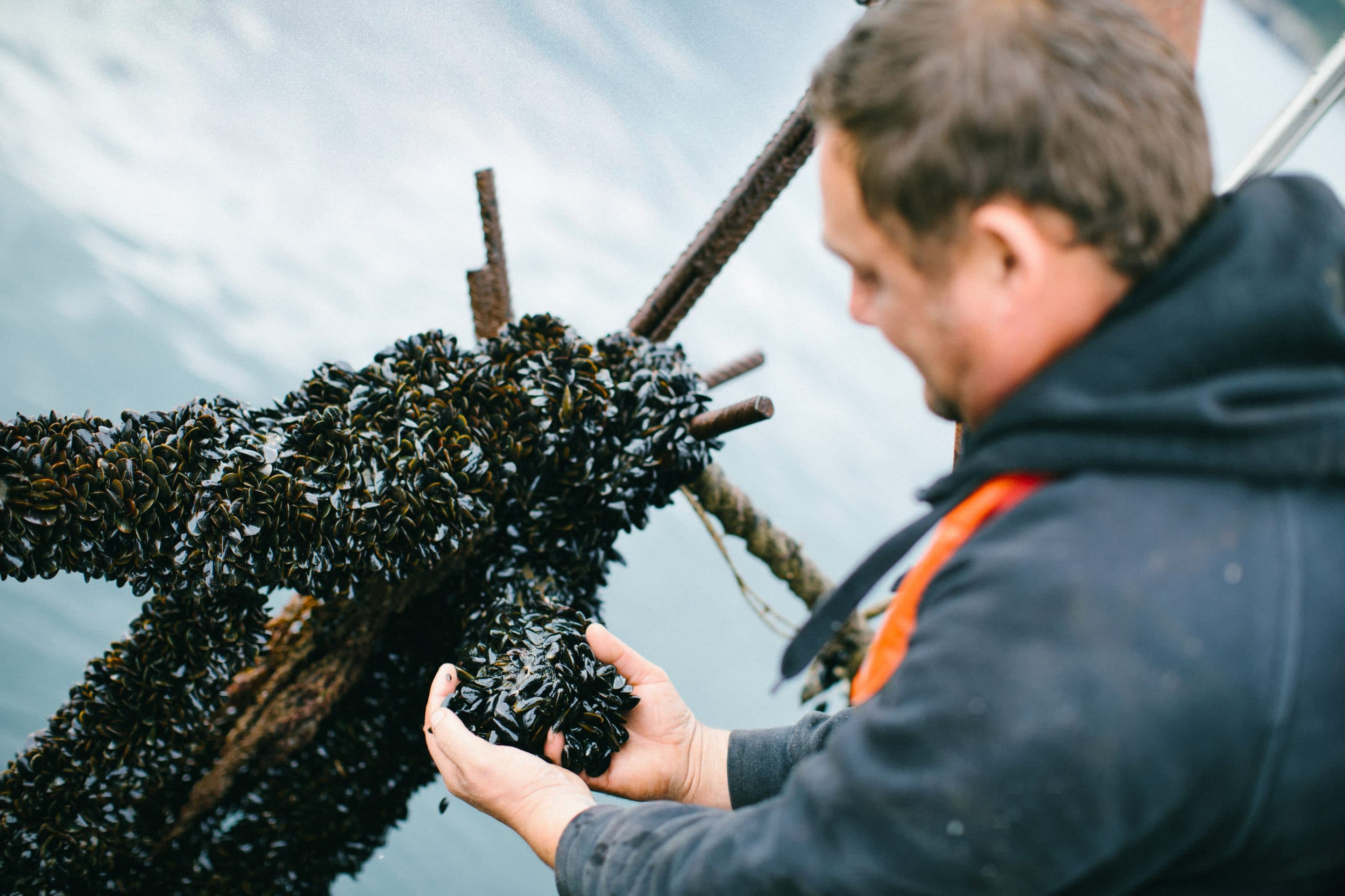 Fowey Shellfish photography and promotional video